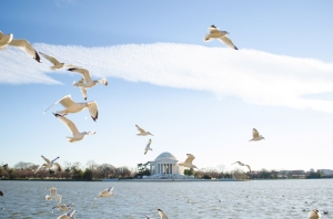 Birds at the Jefferson Memorial